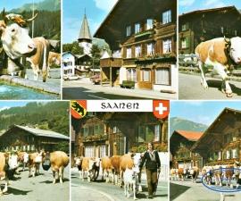 Saanen (Berner Oberland)